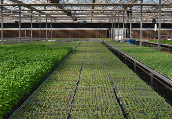 蔬菜育苗盤關鍵技術